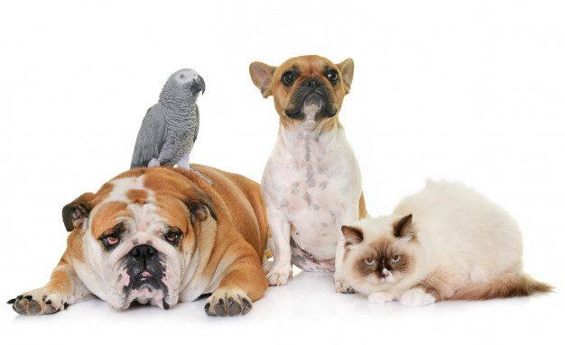 group-pet